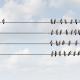 individual vs collectiveness